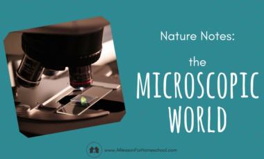 microscope homeschool homeschooling nature notes