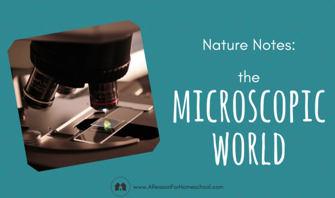 Nature Notes: The Microscopic World