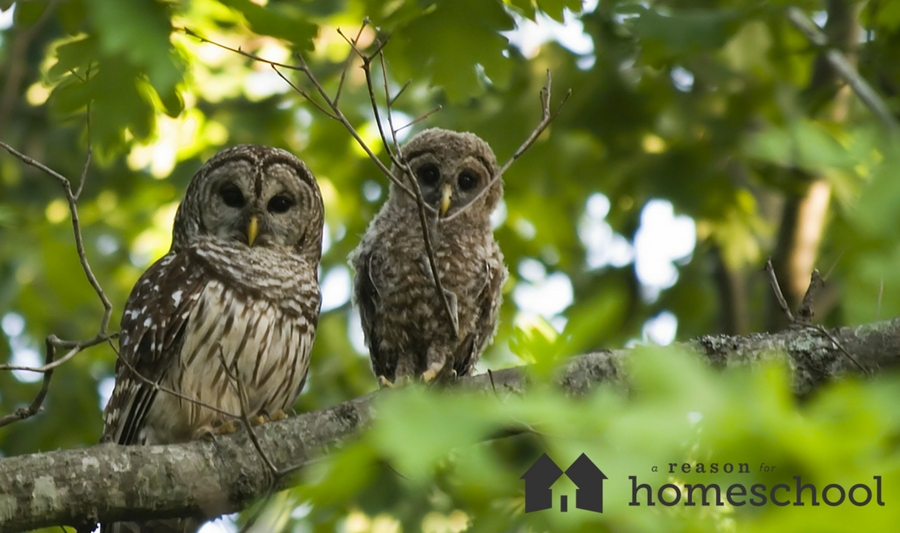 Nature Notes: Owl Pellet Dissection - A Reason For Homeschool
