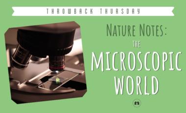 microscopes science nature homeschool homeschooling