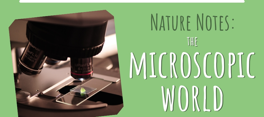 Throwback Thursday: The Microscopic World (Nature Notes)